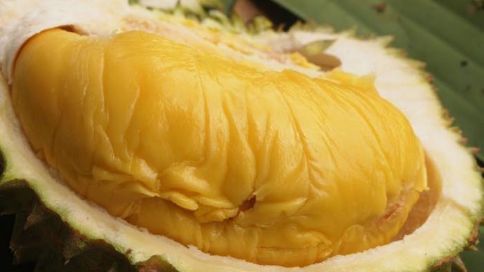 Jenis-Jenis Durian Paling Manis yang Ada di Dunia