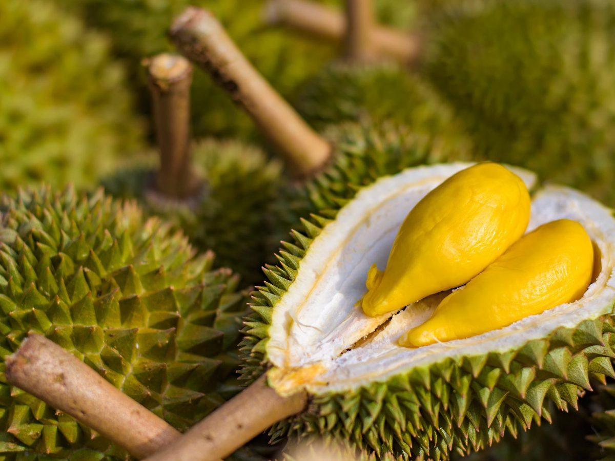 Jenis Durian Paling Populer dengan Rasa Lezat dan Nikmat