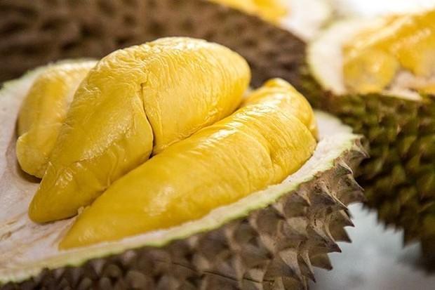 Cara Budidaya Durian Musang King Untuk Pemula Paling Mudah
