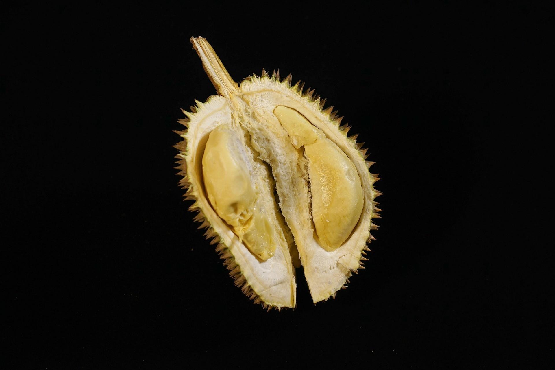 Durian Montong Jogja, Sebagai Jenis yang Cukup Populer