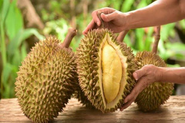 Manfaat Mengkonsumsi Durian yang Bisa Dirasakan
