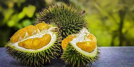 Cara Budidaya Durian Musang King dengan Tepat
