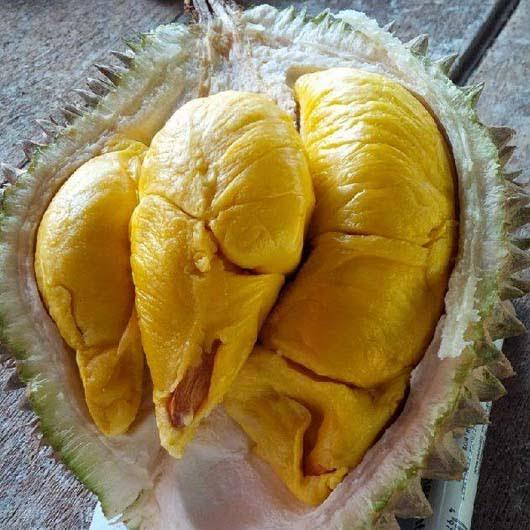Penyebab Durian Musang King Populer dan Diminati Oleh Masyarakat